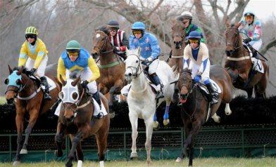 black-horse-races